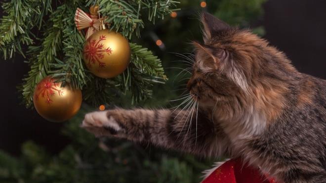 Gatto gioca con una palla dell'albero di Natale