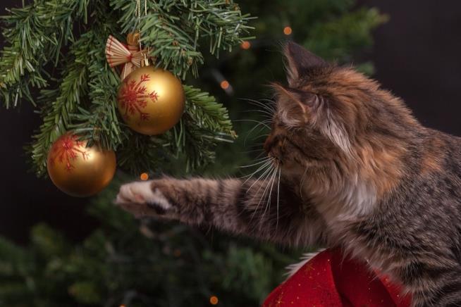 Lalbero Di Natale A Prova Di Gatto Geniale O Trash